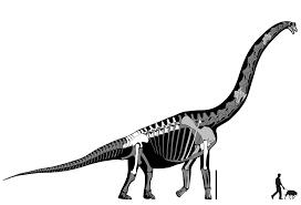 brachiosaurus size brachiosaurus brancai is not brachiosaurus sauropod vertebra