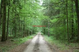 Resultado de imagen para imagenes de el bosque de bialowieza