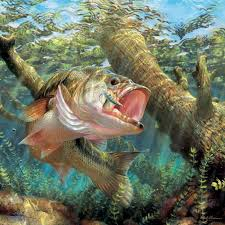 Fish Backgrounds Bass Fishing Wallpapers Top Free Bass Fishing Backgrounds