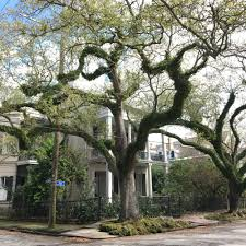 photo of haunted history tours new orleans la united states anne rice s