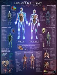 Amazon Com Popar Human Anatomy Interactive Wall Chart By