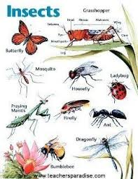 Insect Chart For Kids Google Search Kindergarten Art