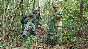 huge quanies of traps for critically endangered pangolin removed from the forest