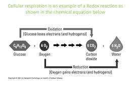 chemical equation below cellular respiration is an example of a redox reaction as shown