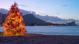 The Best Christmas Trees In The United States  Travel  LeisureChristmas Tree Hawaii