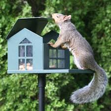 grey squirrel house plans best of food pantry metal squirrel feeder handcrafted metal squirrel feeder