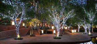 landscape lighting trees.  Trees Lighting Trees How To Wrap Outdoor With Lights Like A Pro    On Landscape Lighting Trees