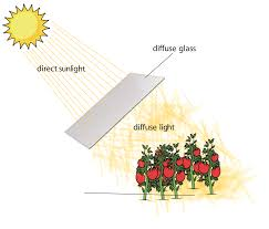 Diffused Light What Is Diffuse Light