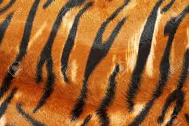 Tiger Pattern Impressive Wild African Animal Hide Pattern Tiger Straps Stock Photo Picture