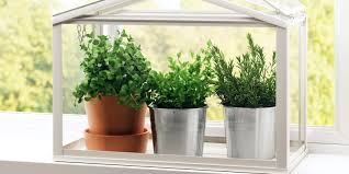 grow an herb garden indoors greenhouse grow your own indoor herb garden kit