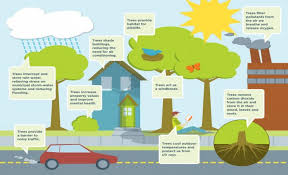 benefits of trees importance of trees tree plantation project benefits of trees