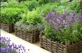 Small Picture gardening direct
