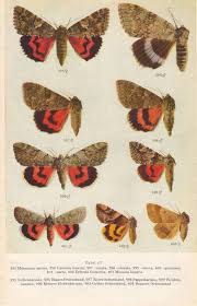 Moth Identification Chart 1958 Moths Identification Chart Insects By Craftissimo On