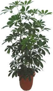 おしゃれなインテリアに人気の観葉植物20選!育てやすい種類とは? | 工具男子新聞