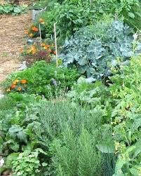fall garden vegetables. fall gardening growing vegetables in the clean up tips . garden