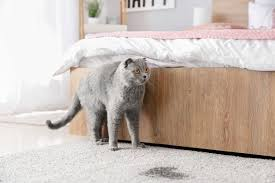 how to get rid of cat urine smell in 5