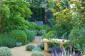 with thyme lavender and other shrubs