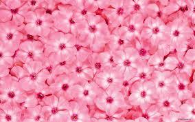 free flower wallpaper beautiful flower wallpaper 1920x1200 wallpaper index 60