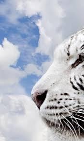 white tiger wallpaper free download.  Download White Tiger Wallpapers  Free Download Of Android Version  M1mobilecom On Wallpaper Free Download Y