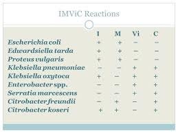 Imvic Chart Microbiology Ii Exam 1 Weeks 1 3 Flashcards Quizlet