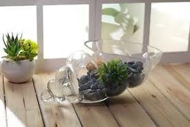 Image is loading NEW-Glass-Shell-Vase-Decorative-Bowl-Caddy-Plant-
