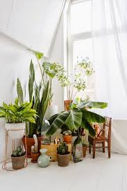 ... Comfortable Indoor Living Room Plants 7 Different Way To Indoor Plants  Decoration Ideas In Living Room ...
