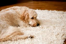 wool rug for pets