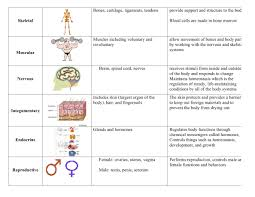 Body Systems Chart Body Systems Chart