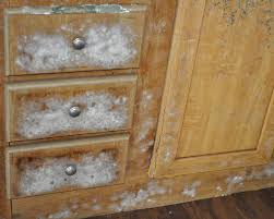 mold in kitchen cabinets j81 on modern home remodeling inspiration with mold in kitchen cabinets