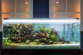 Light Requirement For Planted Aquarium A Beginners Guide To Planted Tanks Marine Depot Blog