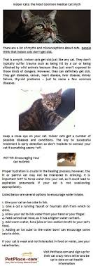 52 best Animal - health care and costs images on Pinterest | Pets ...