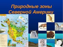 Конспект презентация урока по географии для класса Природные  слайда 6 Природные зоны Северной Америки