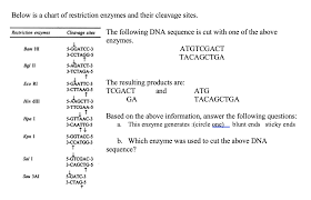 Enzyme Chart Solved Below Is A Chart Of Restriction Enzymes And Their