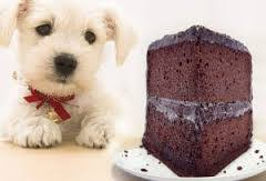 my dog ate chocolate what should i do