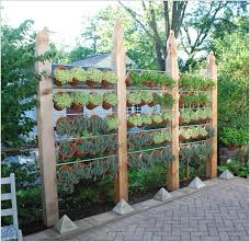 a wonderful privacy screen that is a vertical garden of terracotta planters