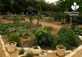 artistic vegetable garden hutto central texas gardener