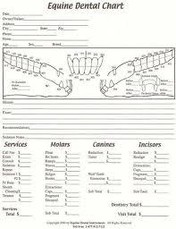 Dental Chart Images Equine Dental Chart