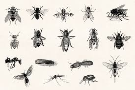 Vintage Illustrations Insects Vintage Illustrations Graphic Goods
