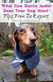 Never Fear Sizing For Hurtta Dog Jackets Is Easy Dog