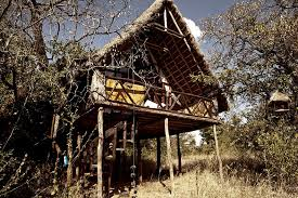 Safari Under The Stars At South Africau0027s Lion Sands Game Reserve Treehouse Hotel Africa