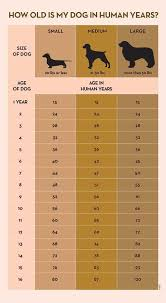 Dog Chart For Age Data Chart Your Dogs Age In Human Years A Conversion