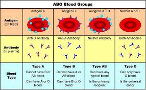 Abo Blood Type Chart 4 3 Theoretical Genetics Bioninja