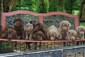 taking deposits for pups going home february