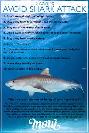 Maui Shark Info Sharks In Maui Hawaii Tiger Reef Mako