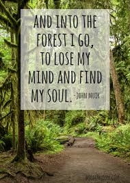 Forest Quotes Fascinating John Muir Forest Quote Art Print Boom48Bloom