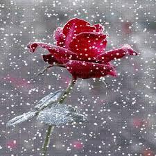 """Résultat de recherche d'images pour """"gif de roses"""""""