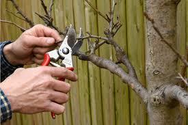Lubricatingoil Sprays For Use On Dormant Fruit Trees  Digital Dormant Fruit Trees