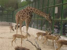 zoo animals in cages. Interesting Animals Cages Will Be Cages No Matter What Their Size With Zoo Animals In