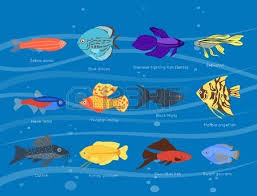 types of ocean fish. exotic tropical fish different colors underwater ocean species aquatic nature flat isolated vector illustration types of