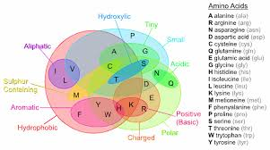 Amino Acid Chart Awesome Amino Acids Really Nice Use Of Venn Diagrams Venn
